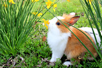 Smell the Flowers ~ Bunnies